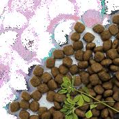 Veterinārās dietas suņiem